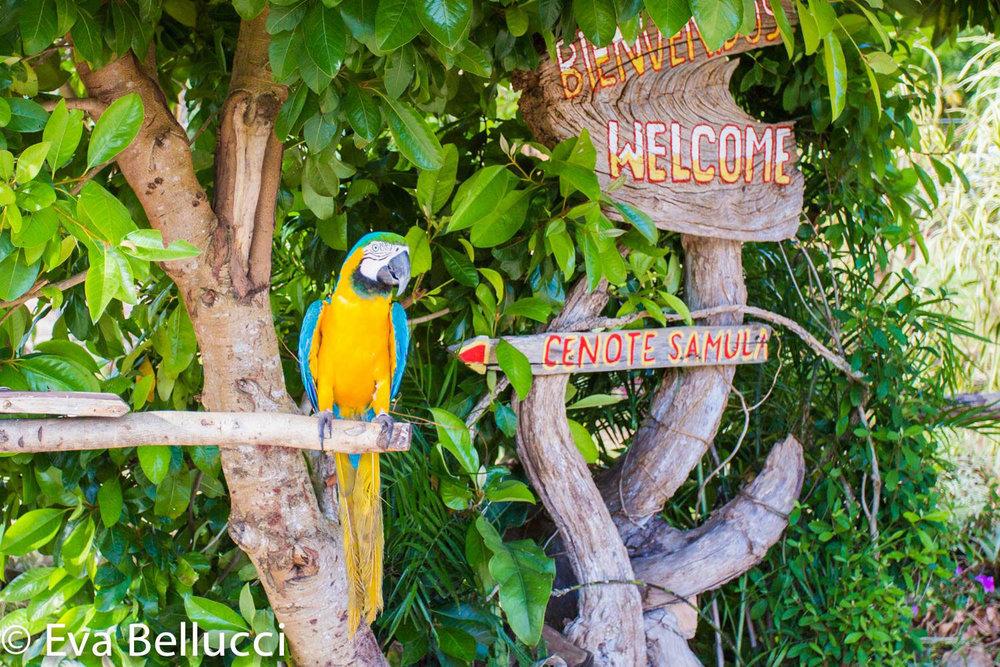 Hammocks_and_Ruins_Riviera_Maya_Mexico_Explore_What_to_Do_Valladolid_Yucatan_Cenote_Samula_5.jpg
