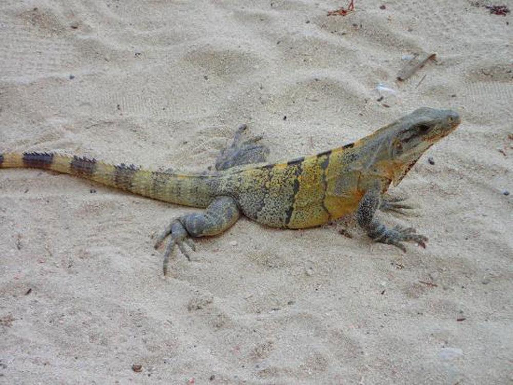 Hammocks_and_Ruins_Riviera_Maya_Mexico_Explore_What_to_Do_Yucatan_Playa_del_Carmen_Beahces_Paamul_13.jpg