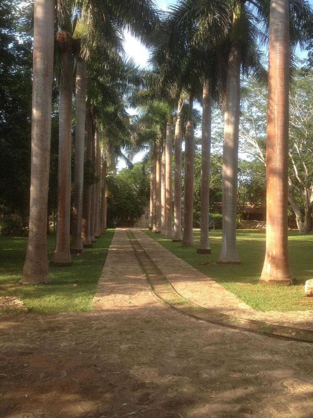 Hammocks_and_Ruins_Blog_Riviera_Maya_Mexico_Travel_Discover_Yucatan_What_to_do_Hacienda_Ochil_15.jpg