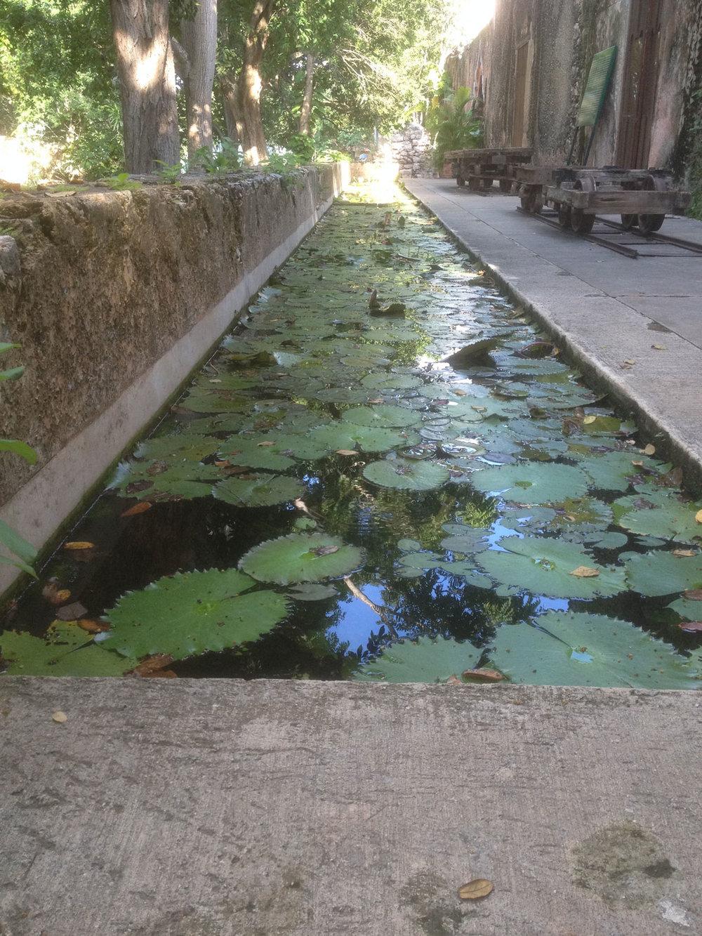 Hammocks_and_Ruins_Blog_Riviera_Maya_Mexico_Travel_Discover_Yucatan_What_to_do_Hacienda_Ochil_16.jpg