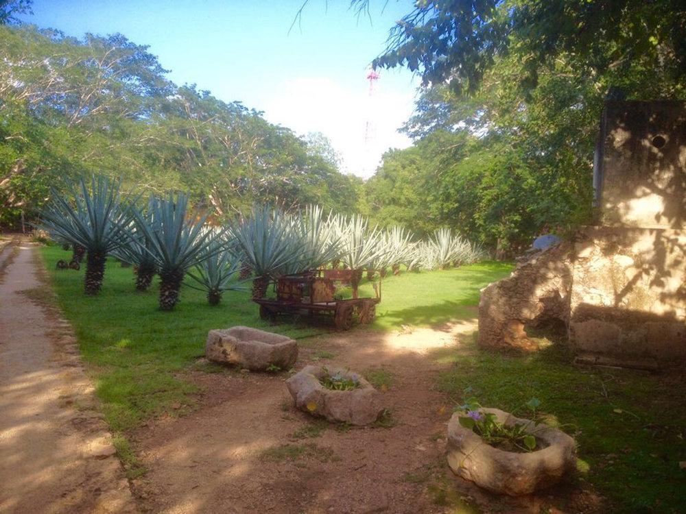Hammocks_and_Ruins_Blog_Riviera_Maya_Mexico_Travel_Discover_Yucatan_What_to_do_Hacienda_Ochil_30.jpg