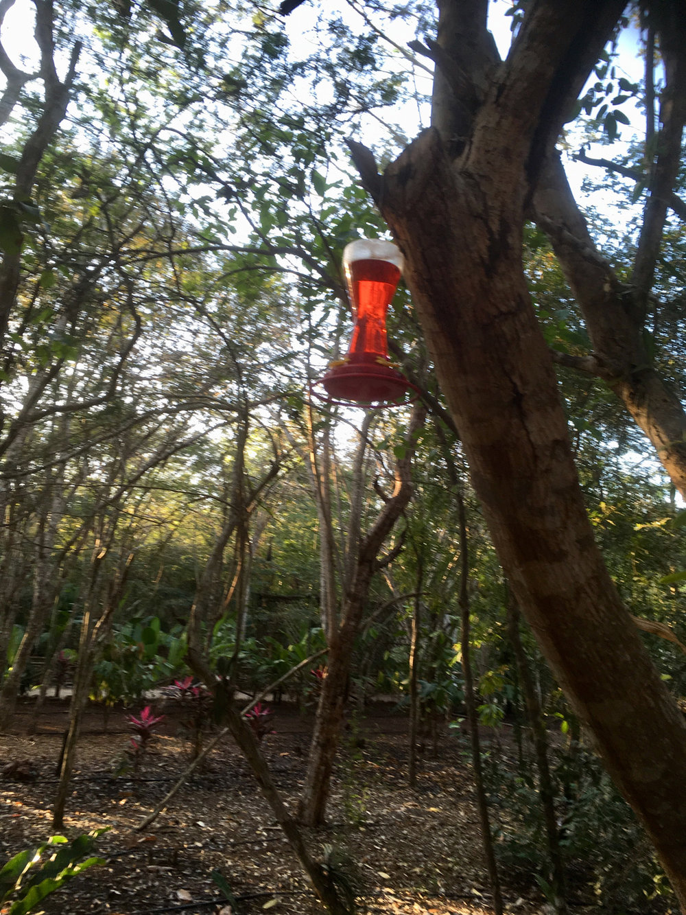 Hammocks_and_Ruins_Riviera_Maya_Mexico_Explore_What_to_Do_Yucatan_Hammocks_Ruins_Choco_story_Uxmal_14.jpg