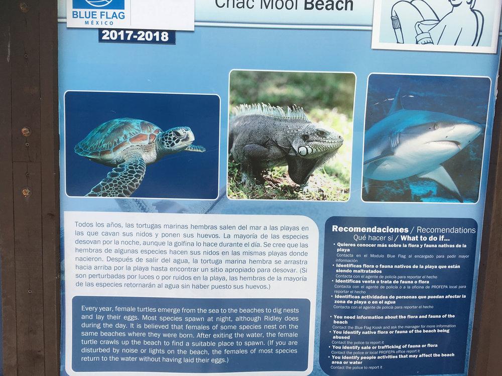 Hammocks_and_Ruins_Things_To_Do_Cancun_Explore_Riviera_Maya_Mexico_Cancun_Beaches_Playa_Chacmul_9.jpg