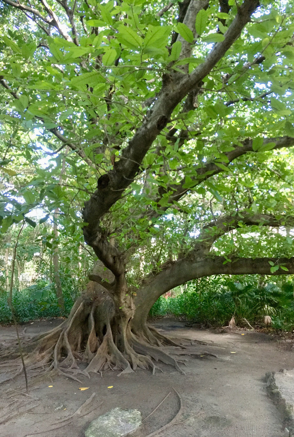 The jungle park of San Miguelito. Right: termite nest.