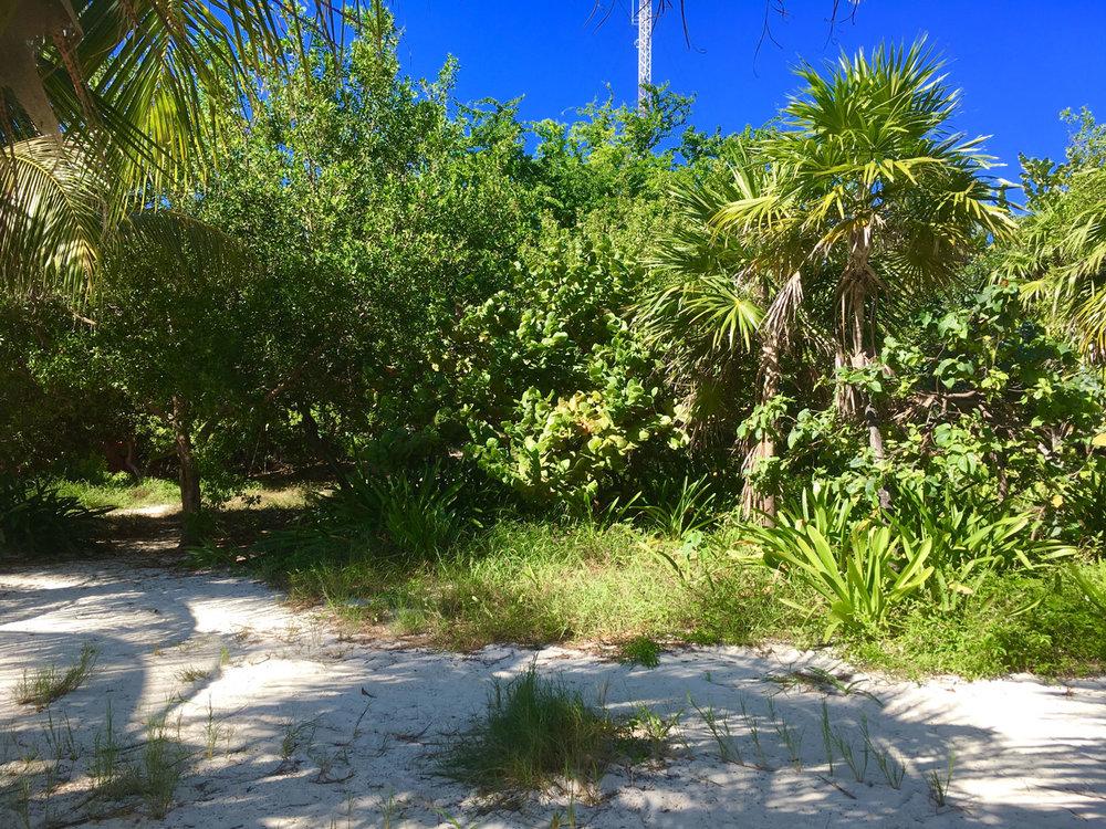 Hammocks_and_Ruins_Things_To_Do_Cancun_Explore_Riviera_Maya_Mexico_Cancun_Beaches_Coral_El_Mirador_II_11.jpg