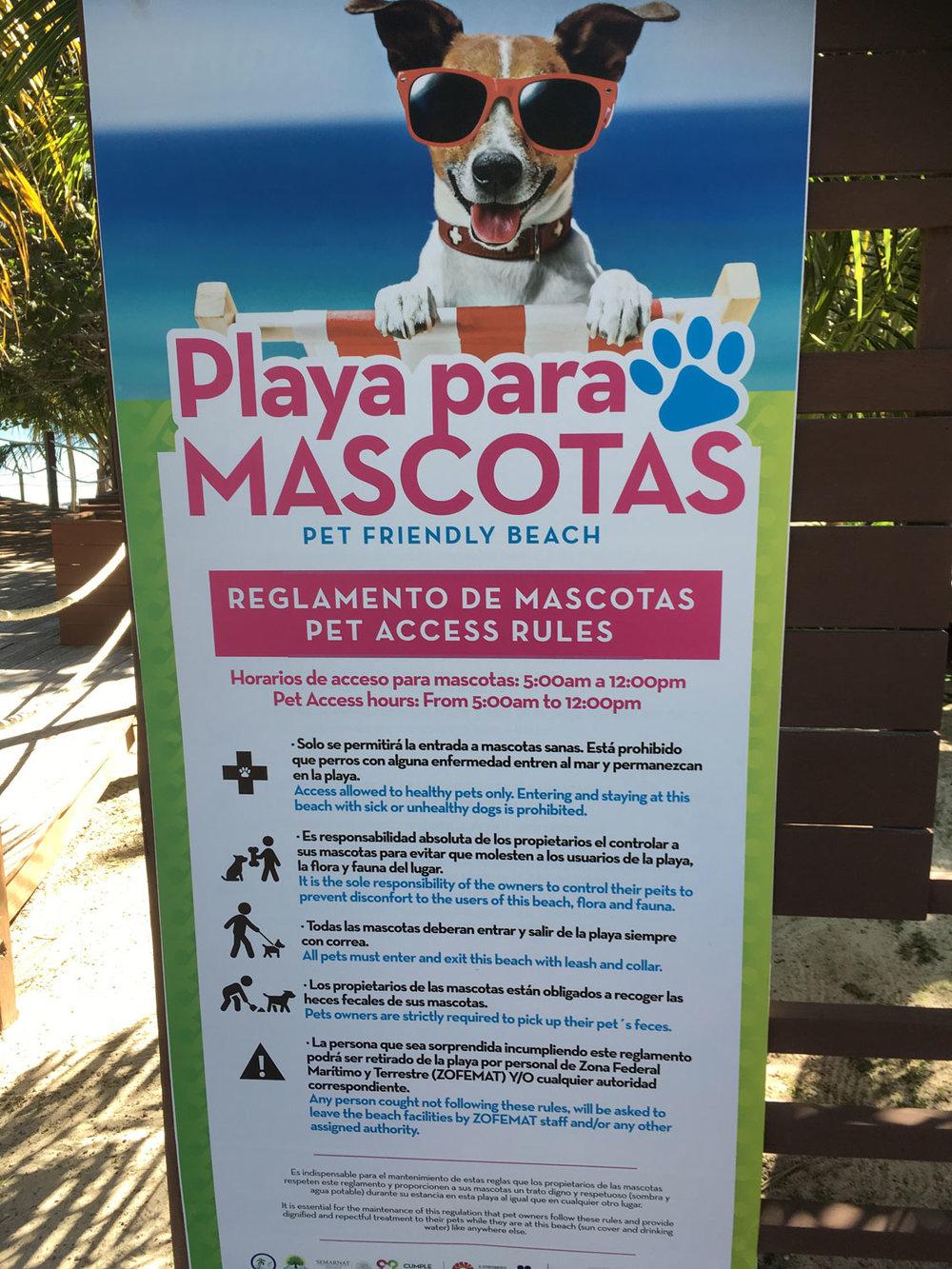 Hammocks_and_Ruins_Things_To_Do_Cancun_Explore_Riviera_Maya_Mexico_Cancun_Beaches_Coral_El_Mirador_II_19.jpg