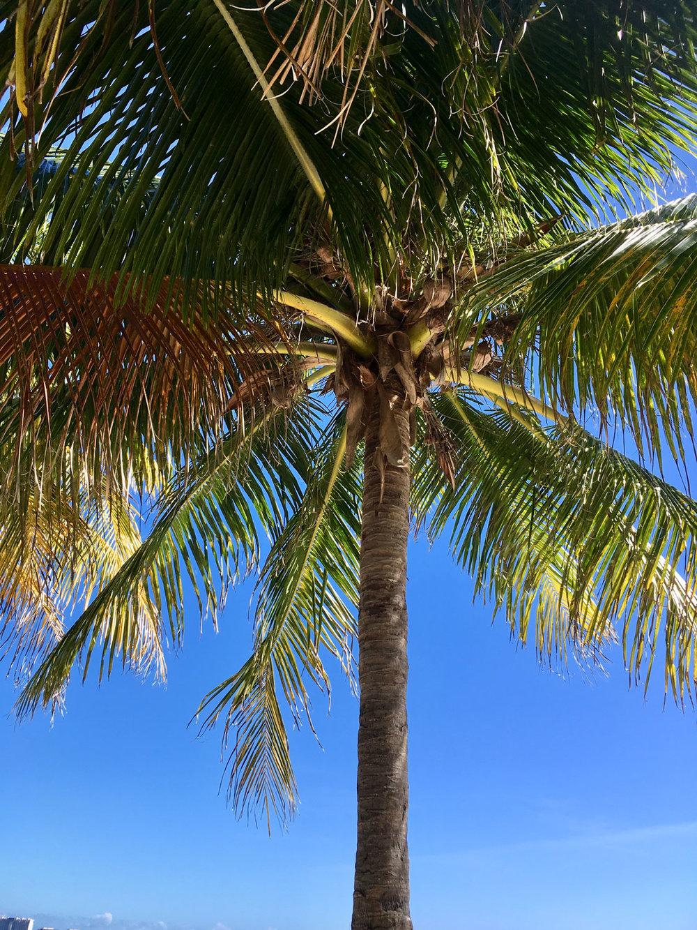Hammocks_and_Ruins_Things_To_Do_Cancun_Explore_Riviera_Maya_Mexico_Cancun_Beaches_Coral_El_Mirador_II_13.jpg