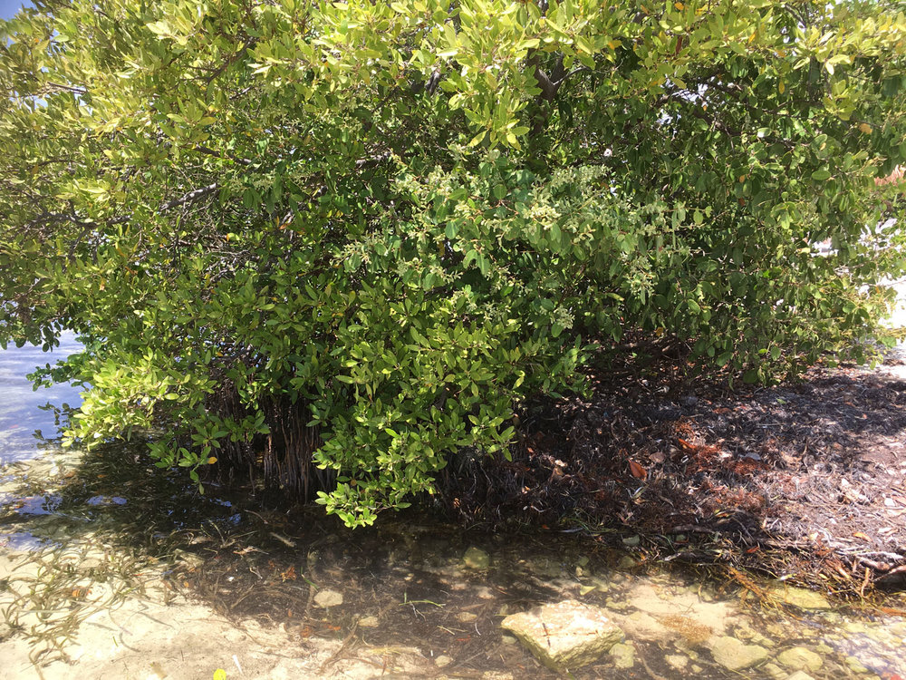 Hammocks_and_Ruins_Blog_Riviera_Maya_Mexico_Travel_Discover_Explore_Yucatan_Hammocks_Beaches_Near_Cancun_Punta_Nizuc_17.jpg