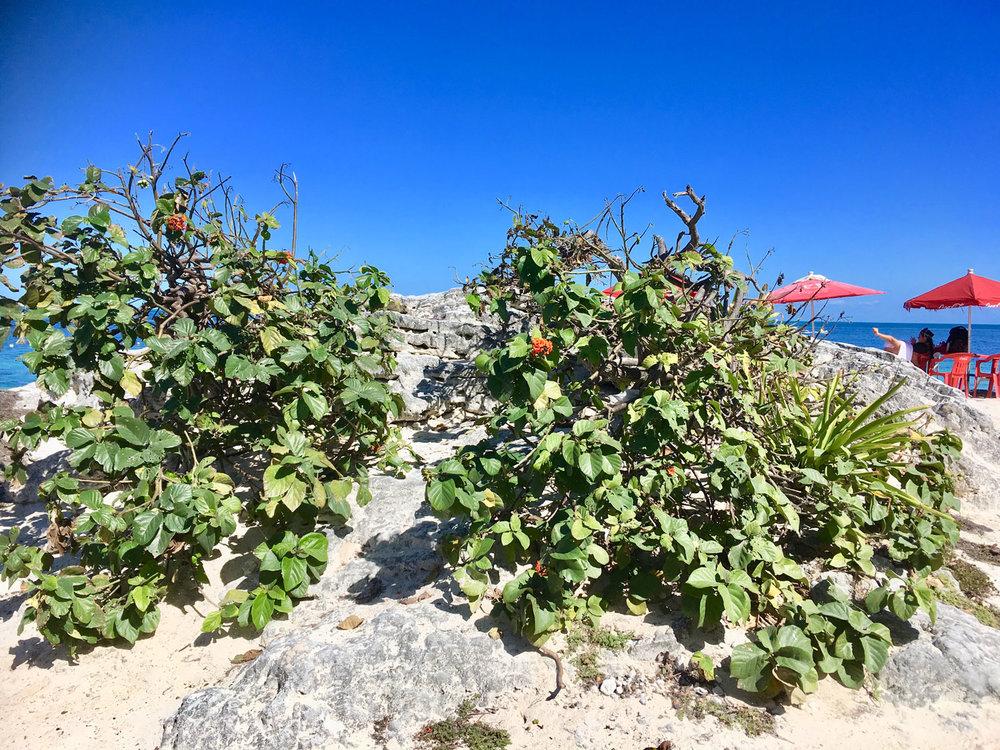 Hammocks_and_Ruins_Riviera_Maya_What_to_Do_Cancun_Beaches_6.jpg