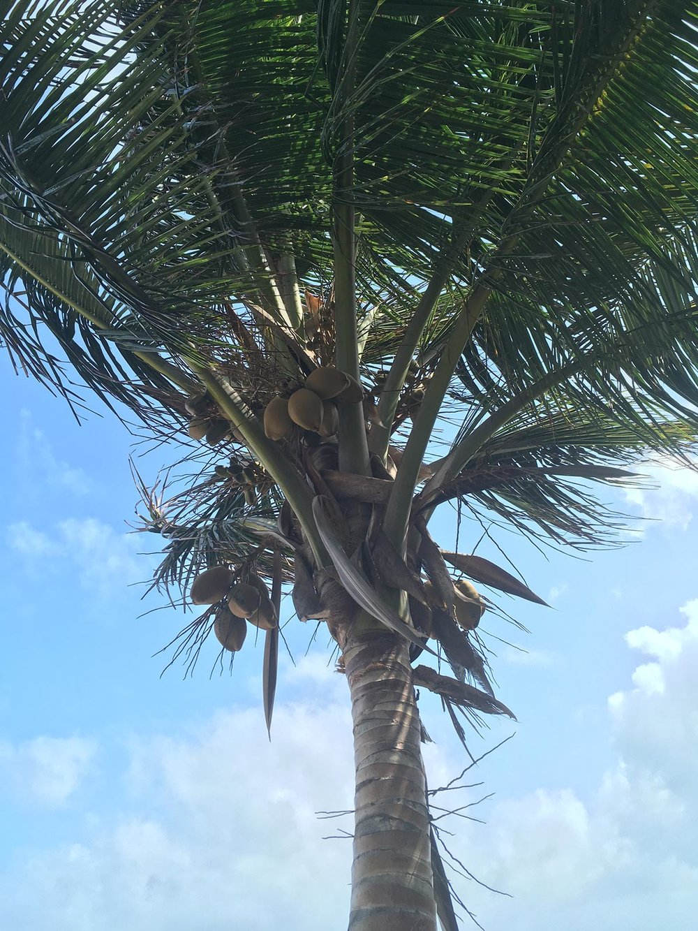 Hammocks_and_Ruins_Riviera_Maya_What_to_Do_Playa_Del_Carmen_Beaches_Tankah_Bay_3.jpg