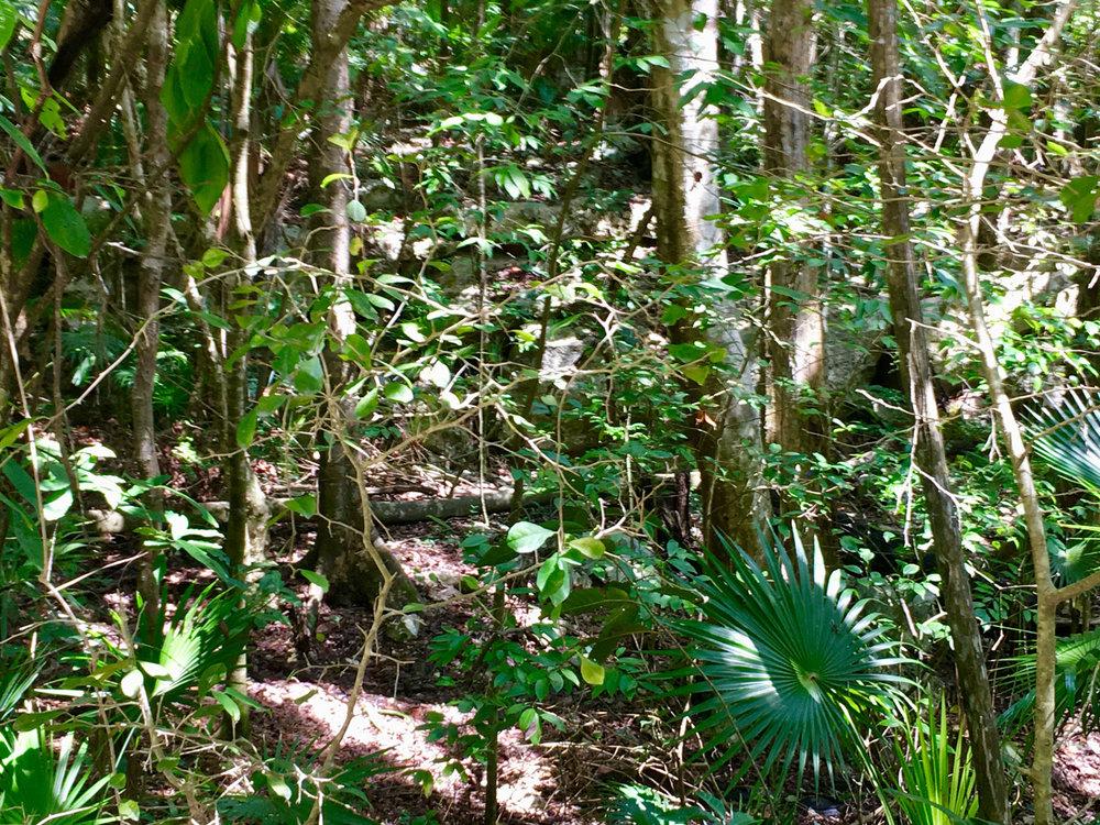 The jungle around the cenote. Left: the cenote.