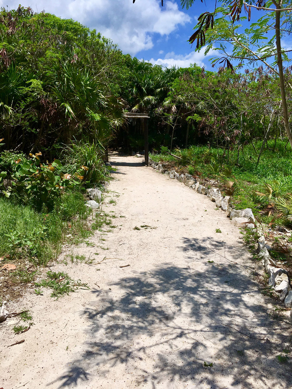 The path to the cenote.