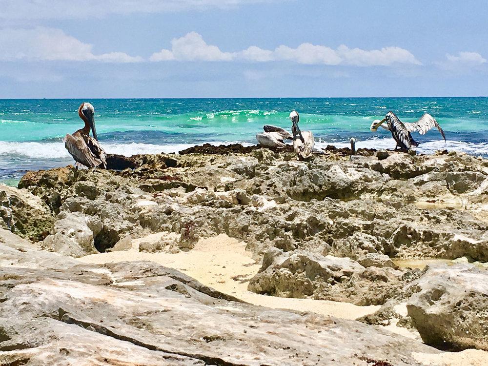Hammocks_and_Ruins_Riviera_Maya_What_to_Do_Tulum_Beaches_Caleta_Tankah_43.jpg