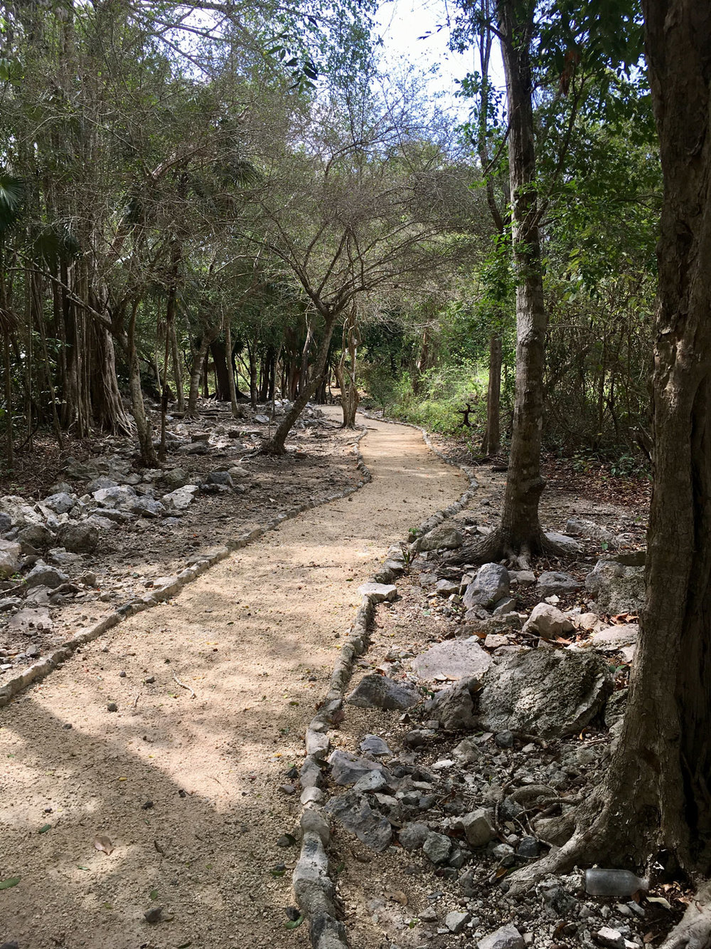 There are many modern day jungle paths between the ruin groups.