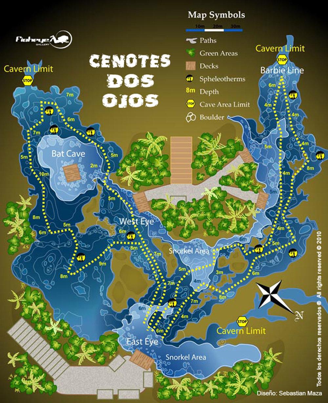 Mangrove around the cenote.