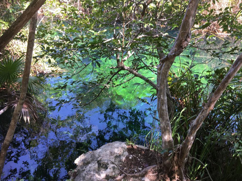 Hammocks_and_Ruins_Riviera_Maya_What_to_Do_Playa_Del_Carmen_Tulum_Cenotes_Cenote_Escondido_11.jpg