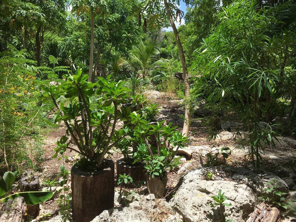 Hammocks_and_Ruins_Blog_Riviera_Maya_Mexico_Travel_Discover_Cenotes_Scuba_Dive_Cenote_Angelita_16.jpg