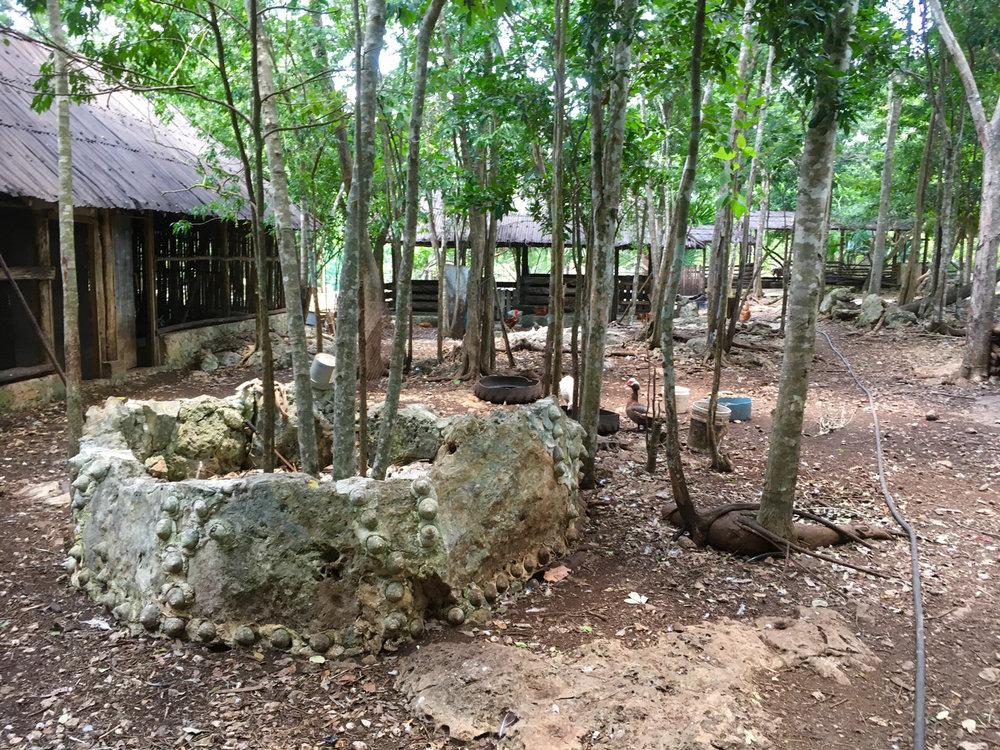 Hammocks_and_Ruins_Blog_Riviera_Maya_Mexico_Travel_Discover_Cenotes_Scuba_Dive_Cenote_Angelita_26.jpg