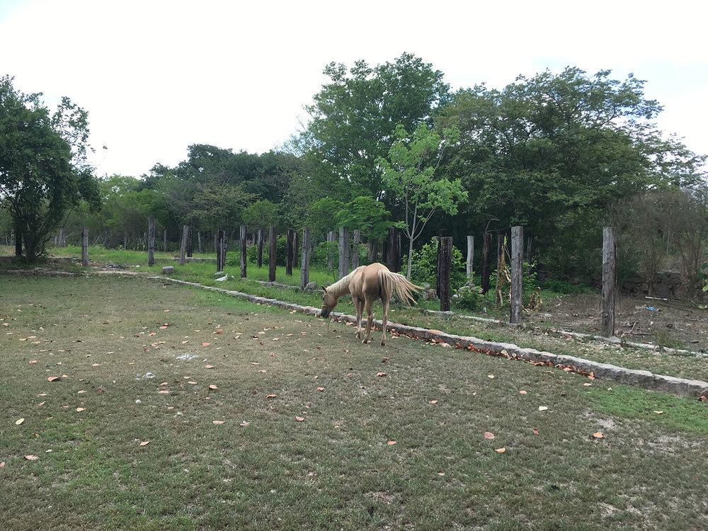Hammocks_and_Ruins_Blog_Riviera_Maya_Mexico_Travel_Discover_Yucatan_What_to_do_Merida_Haciendas_Tepich_28.jpg