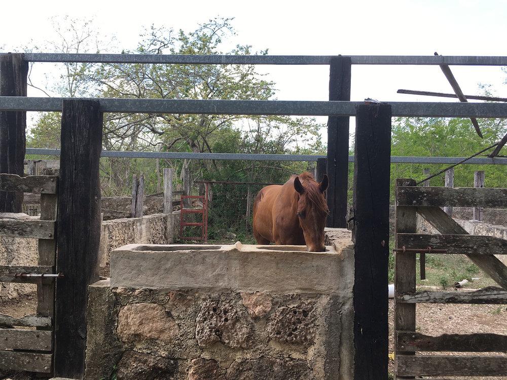 Hammocks_and_Ruins_Blog_Riviera_Maya_Mexico_Travel_Discover_Yucatan_What_to_do_Merida_Haciendas_Tepich_27.jpg