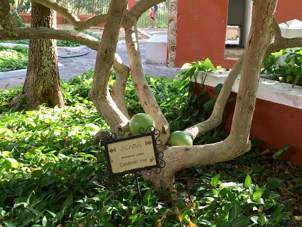 Hammocks_and_Ruins_Blog_Riviera_Maya_Mexico_Travel_Discover_Yucatan_What_to_do_Merida_Haciendas_Teya_40.jpg