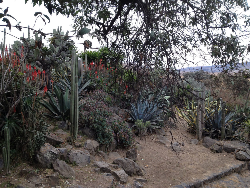 Cactus garden around the hacienda.