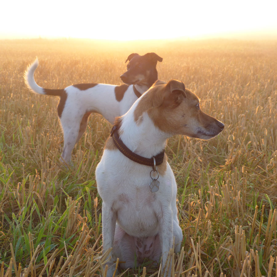 Auf dem Hof wohnen zwei freundliche und verspielte Hundemädchen. Jessy und Joy. So hübsch. Die hätte ich am allerliebsten mitgenommen!