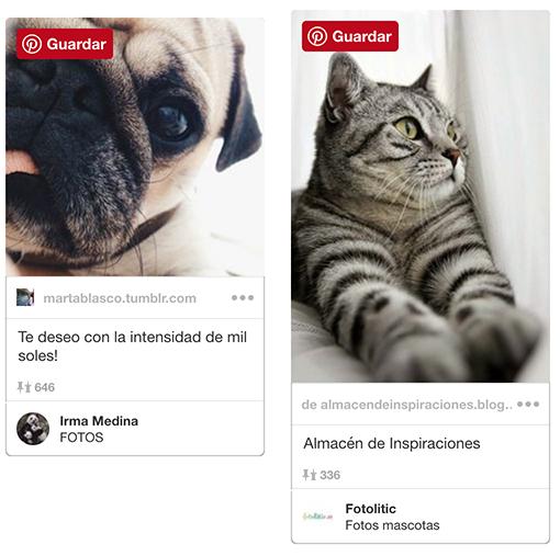 consejos_para_hacer_fotos_a_mascotas.jpg