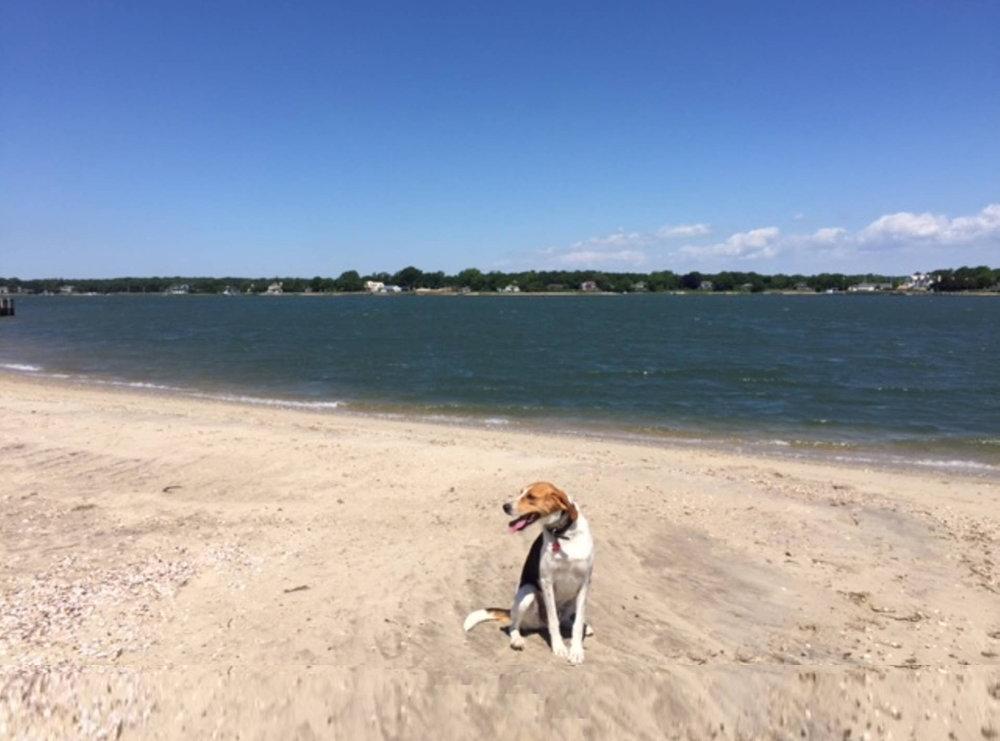 cooper beach.1500.jpg