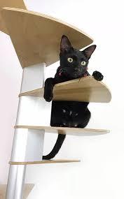 cat stairs.jpg