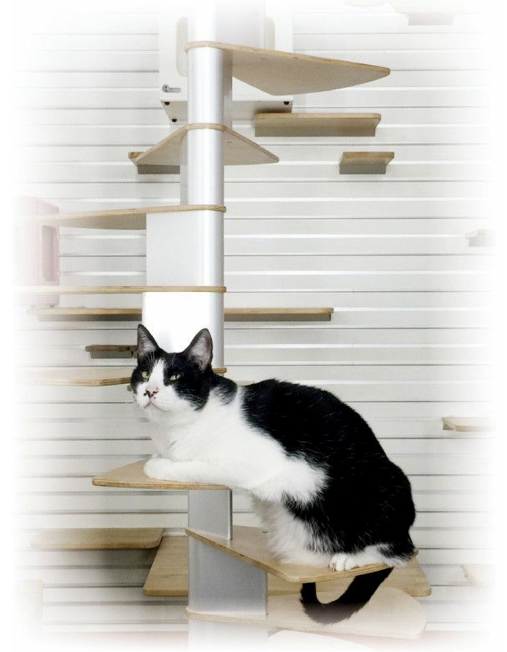 cat staircase