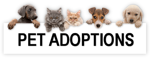 pet adoption.png