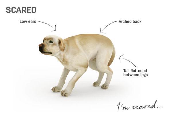 frightened dog.jpg