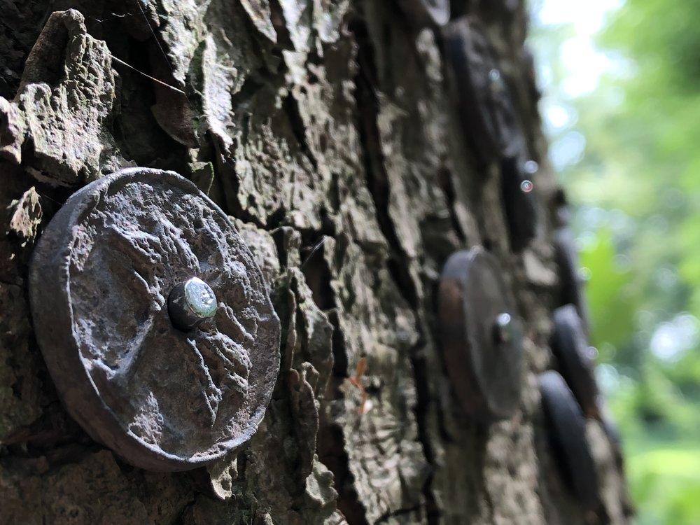 Wish tree -