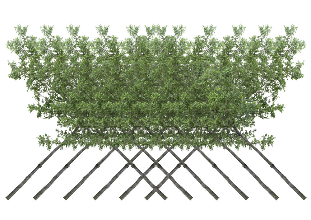 Hedge in cross stitch -