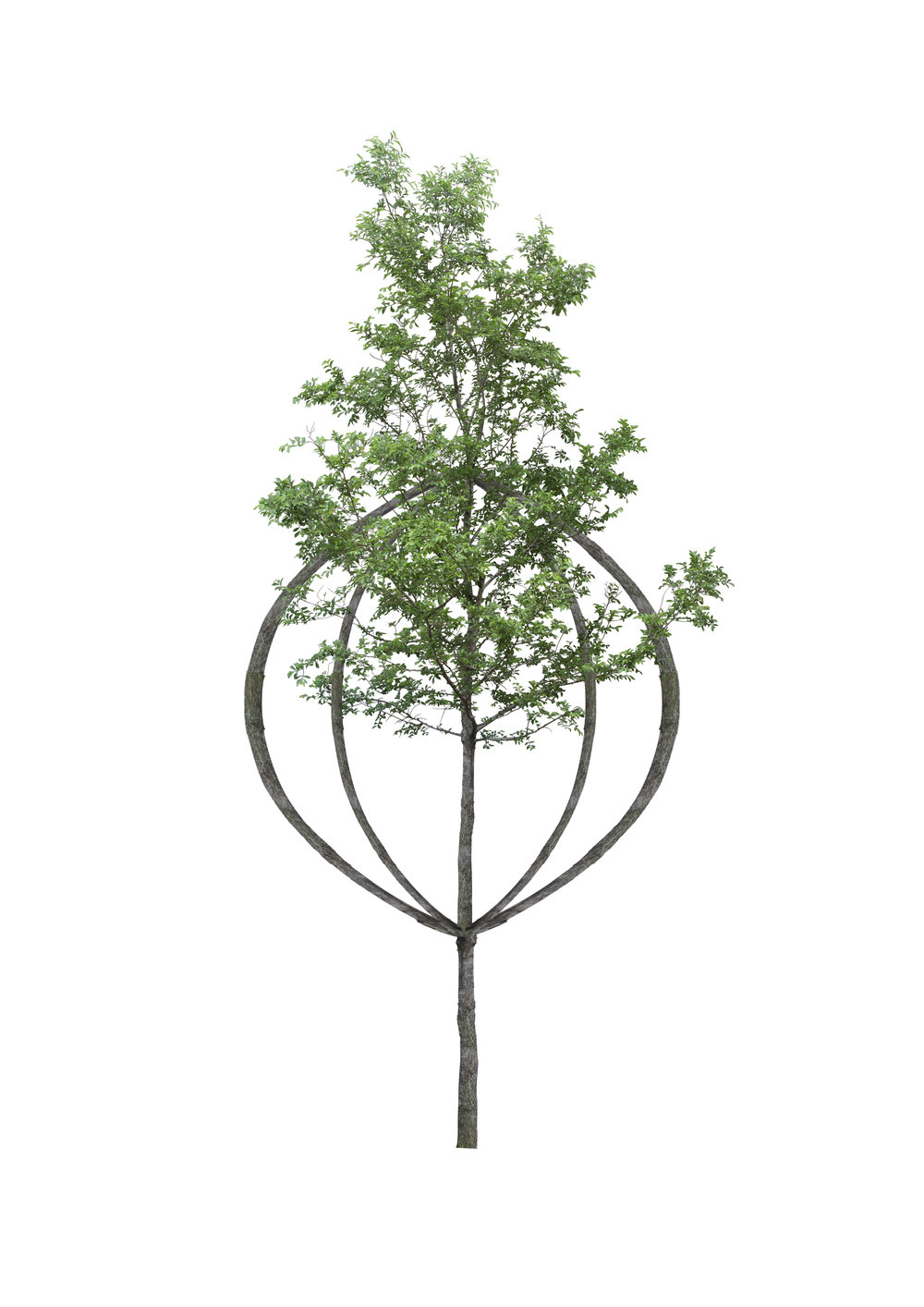 Tree shapes -