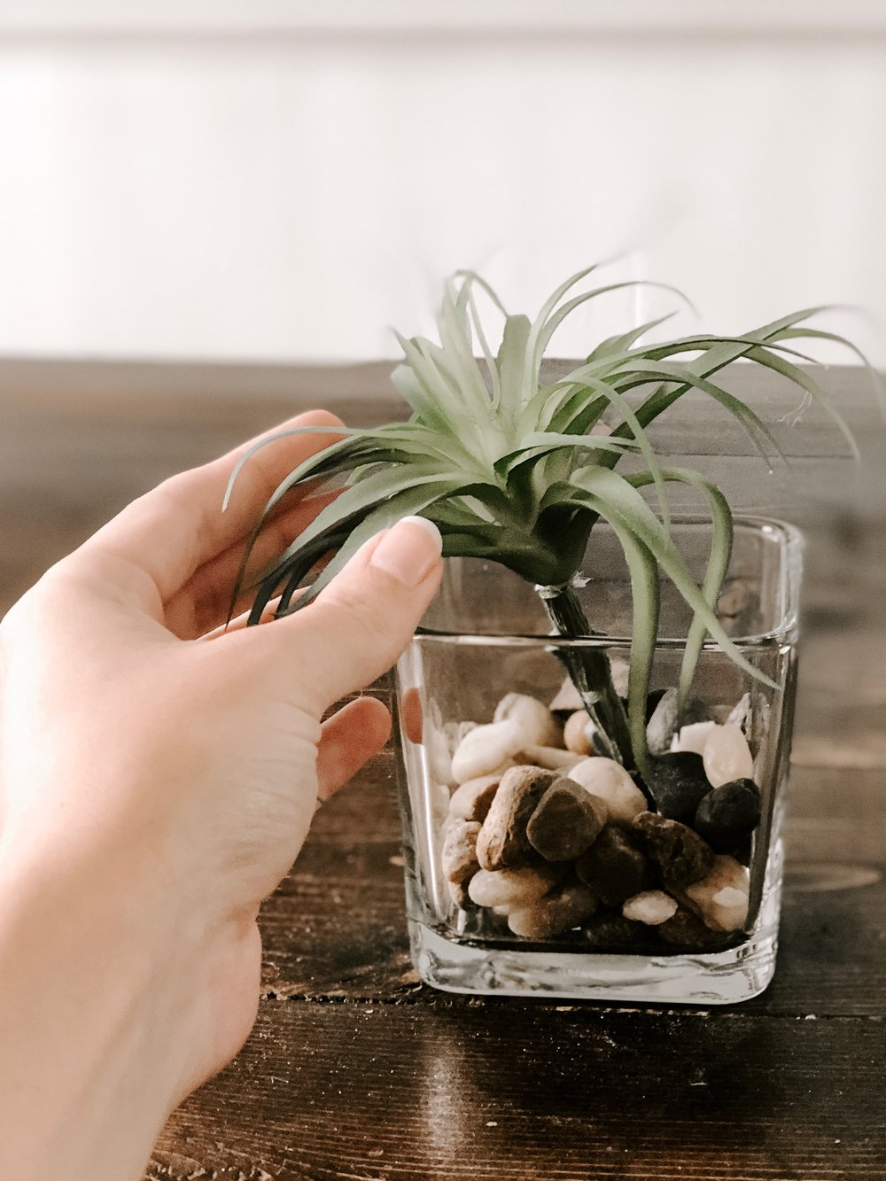 Add succulent to jar