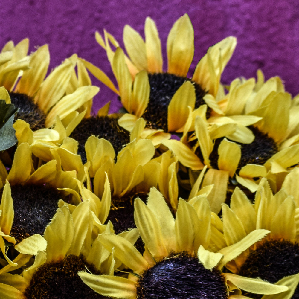 5x5_crop_flowers.jpg
