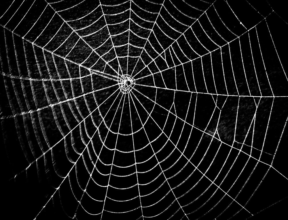 Spider web can be quited strong, expansive and elastic. The structure system of the spider web can take a lot of force and even if some parts failed, the system can still function.