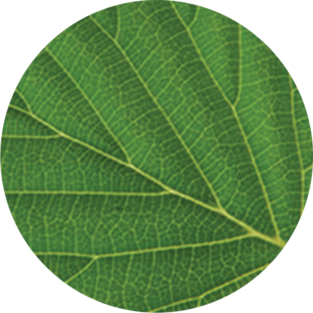 das_thetree_leaf3.png