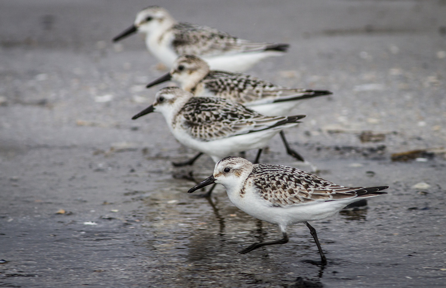 EVENTS — Maine Young Birders Club