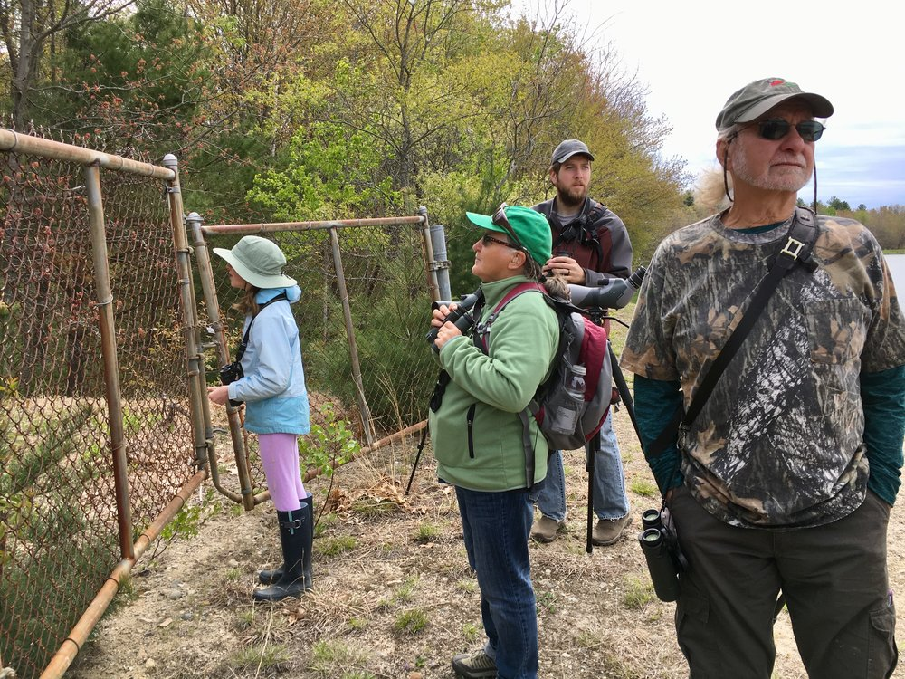 Searching for Wood Ducks in nesting boxes