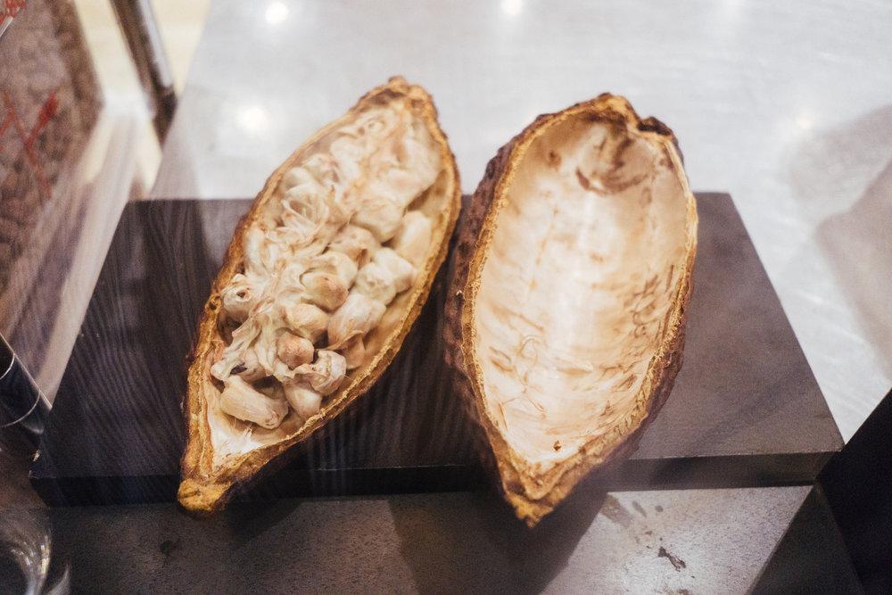 巧的是隔天我们在逛Mission的Dandelion Chocolate的时候看到了可可果本人,附上照片一张混个脸熟。