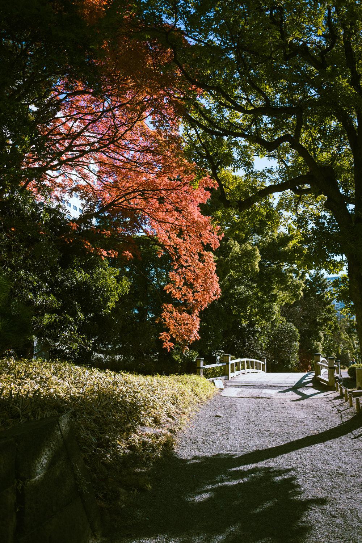 Tokyo Day 1-39.jpg