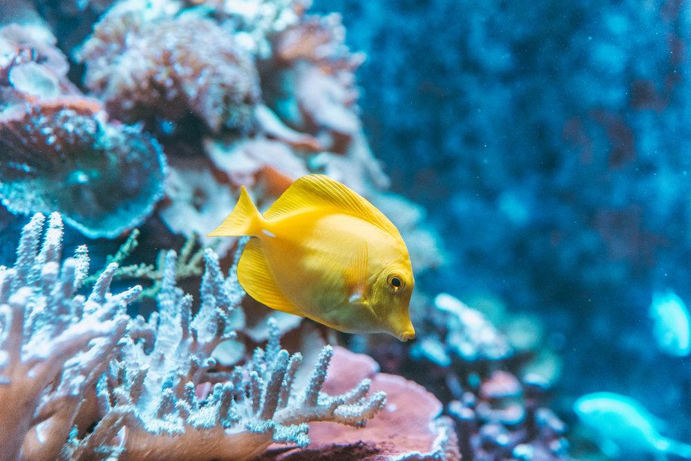 Aquarium of the Bay-3.jpg