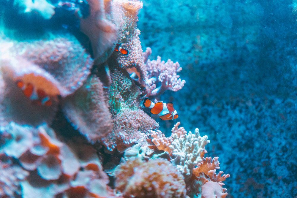 Aquarium of the Bay-4.jpg