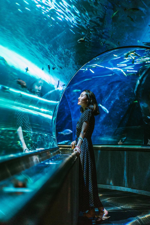 Aquarium of the Bay-9.jpg