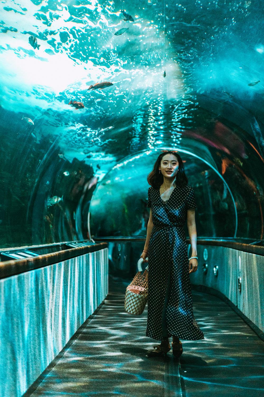 Aquarium of the Bay-8.jpg