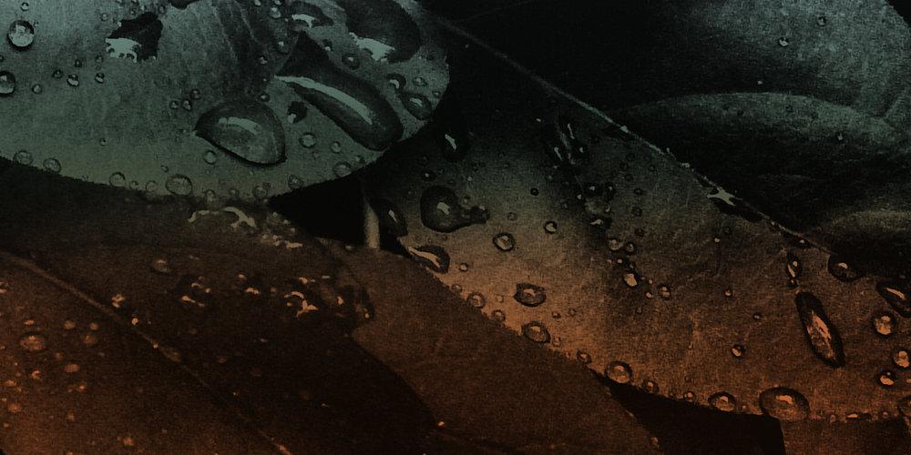 Absinthe_Banner.jpg