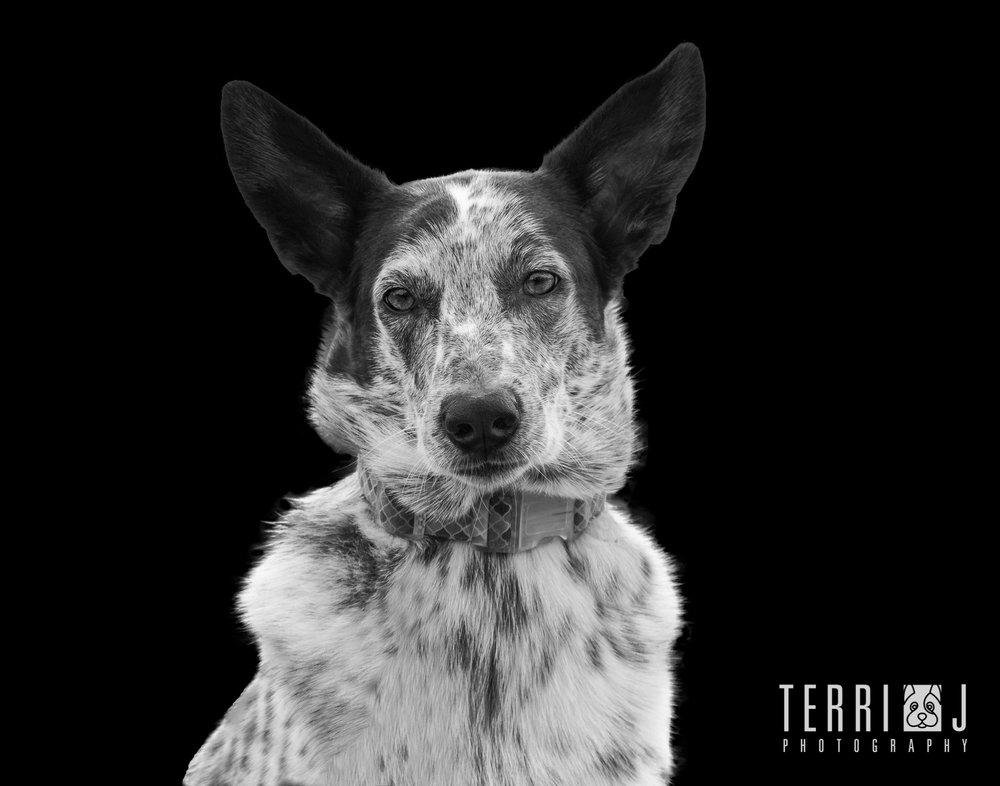 dog photography toronto portrait.jpg